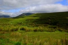 Bucolic landscape (annalisabianchetti) Tags: paesaggio landscape bucolic ireland irlanda europa green fields grass prati travel rural rurale clouds nuvole verde