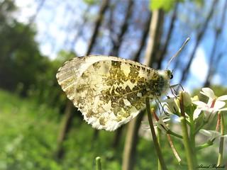 Butterfly 1551