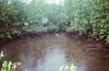 Mangroves in the Rain, Palawan 2017 (Sly Panda) Tags: sly panda palawan mangrove trees 35mm colour canon waterproof sureshot a1 film analog