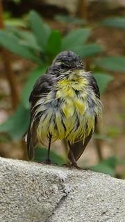 Bird 6237