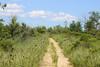 Through the grasses at Rumney Marsh (monikahschuschu) Tags: summer june rumneymarsh marsh saltmarsh wetland field nature outdoor masschusetts