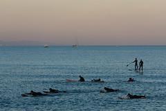 Surf course, Barcelona, Spain - Le cours de surf, Barcelone, Espagne (Laurent Saleh) Tags: barcelone lianeproject espagne lieux catalogne projet barcelona catalunia espagna spain