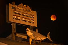 Blood Attracts Sharks (howardignatius) Tags: superbluebloodmoon bluemoon eclipse night moon shark sign