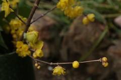 180124017 (murbozero) Tags: murbo japan flower