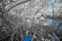 Path (W_10) Tags: 590nm glaucomeneghelli infrared ir trancoso infraredphotography sonyalpha infraredcommunity infinityinfrared sonyimages sonyshooters mirrorless landscape creativeir infraredimages beautiful sony infraredworld kolarivision swpa buy here httpsmugs2s90sts