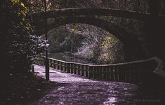 The Road Under the Bridge (aris.sfakianos) Tags: road newcastle uk england rainy hike trees colours moody forest park bridge