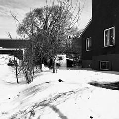 Une patinoire privée dans la cour... (woltarise) Tags: rosemont montréal maison cour cabane glace patinoire hiver neige