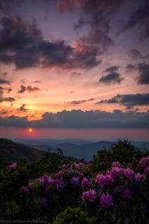 Sunset Blooms