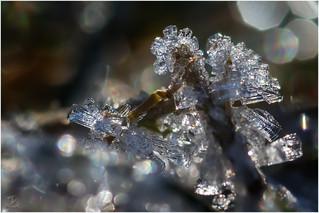 Kleine Eiswelten