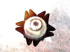 Mystical Fae Forest - ELVENSHIRE (Grace81 Capalini) Tags: secondlife second life elvenshire mystical forest fôret rêve dream