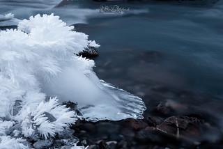 Eisfuss / Icefoot