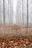 Niebla (pascual 53) Tags: canon alfaro larioja 1dmarkiii chopera niebla frio aguazon xabi paisajevertical