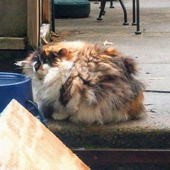 In case you forgot, Hester is the #floofqueen (Jimmy Legs) Tags: in case you forgot hester is floofqueen
