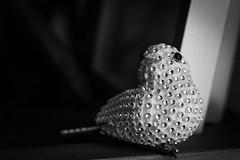 Glam mockingbird 22/365