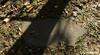 In the Shade of a Tree (rumimume) Tags: potd rumimume 2017 niagara ontario canada photo canon 80d sigma fall autumn stmarks church graveyard sun november outdoors history uppercanada age notl