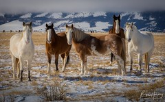 Equine Excellence - A Family Portrait - Centennial, Wyoming (www.rootsstudiophoto.com) Tags: horsephoto wyomingphoto wyominglandscape laramie rockymountains ranch agriculture horse horses equine plains oldwest
