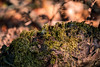 Micro world (MJ6606) Tags: wood green detail macro moss flowersplants outdoor winter nature florida