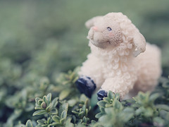 Counting Sheep (Jam-Gloom) Tags: 60mm28 60mmmacro28 60mmmacro macro 60mm olympusuk olympusomdem5 olympus omdem5 omd em5 olympusomd ceramic kitsch sheep countingsheep ceramicsheep succulent