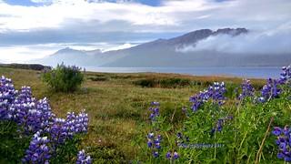 Island-Seydisfjordur Fjord