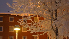 IMG_4340 (Mr Thinktank) Tags: raureif frost