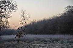 Wintermorgen - A winter´s morning (LENS.ART Photographie) Tags: natur wald sonnenaufgang sunrise woodes frostwinter landschaft nikon d7200 baum tree frosty lichtung norddeutschland germany niedersachsen