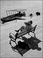 Rishikesh - Here Comes the Sun (Christian Lagat) Tags: inde india uttarakhand rishikesh gange noiretblanc blackwhite ganges homme man dos back ombre shadow banc bench chien dog vaches cows bateau boat ghats