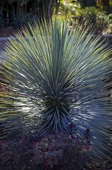 Huntington Gardens (Robert Borden) Tags: green plant life huntingtongardens pasadena la losangeles socal cali california west usa northamerica texture nature canon canonphotography canonusa canonrebel