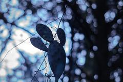 Hangman (1durch0) Tags: hangman cactus tree night death tod art live kaktus