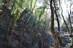 nature (Mara Miao) Tags: nature trees forest leaves sun peace pace alberi natura armony walking mountains
