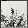 Archiv YY035 Pfadfinder Ausguck, 1950er (Hans-Michael Tappen) Tags: archivhansmichaeltappen pfadfinder padfinderkluft kluft outdoor gelände fotorahmen natur landschaft scenery 1950s 1950er ausblick weitblick aussicht erkundung baumwipfel scouts scout