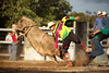 Walcha Rodeo 2. (jasoncstarr) Tags: rodeo walcha nsw cowboy cowgirl cow buckingbronc bronc bull bullriding steerwrestling ropeandtie roping canon canoneos6d 70200mm tamron70200mmf28lens sport clowns