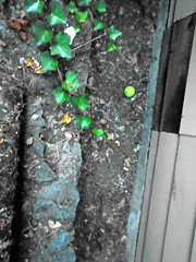 DSC01106 (classroomcamera) Tags: home house garden green plant plants growth dirt soil yard ground wall concrete