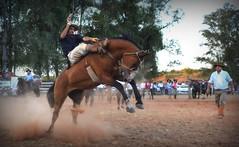 Rafael Cardoso e Mistério da Furacão (Eduardo Amorim) Tags: gaúcho gaúchos gaucho gauchos cavalos caballos horses chevaux cavalli pferde caballo horse cheval cavallo pferd pampa campanha fronteira quaraí riograndedosul brésil brasil sudamérica südamerika suramérica américadosul southamerica amériquedusud americameridionale américadelsur americadelsud cavalo 馬 حصان 马 лошадь ঘোড়া 말 סוס ม้า häst hest hevonen άλογο brazil eduardoamorim gineteada jineteada