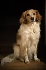 Infinite love (jailbrek) Tags: iphone7 love dog cani