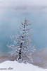 Just A Tree (maureen.elliott) Tags: tree frost water blue aqua hotspring geothermalarea yellowstonenationalpark nature winter landscape mist steam