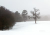 White out at Little Hay... (petegatehouse) Tags: snow trees whiteout blanket misty 12thhole golfcourse