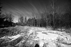 in the forest (Kens images) Tags: quiet clouds monochrome b w wide angle for ground shrubs winter snow spring like solitary colour touch feel kanata rural canon