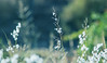 Morning light (pambrighton) Tags: grass blur morning soft intothesun