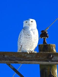Owl at -25C!