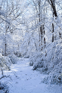 Snow in Raleigh, NC