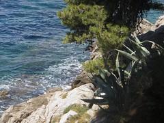 Promenade au bord de l'eau, Cavtat, comitat de Dubrovnik-Neretva, Dalmatie, Croatie. (byb64) Tags: cavtat ragusavecchia epidaurus dubrovnikneretva dalmatie dalmatia dalmatien dalmacia dalmazia croatie hrvatska europe europa eu ue meradriatique adriatique adriatischesmeer adria adriatic adriaticsea adriático maradriático mareadriatico mer mar see meer mare paysage paisaje paesaggio landschaft landscape vue view vista veduta côte rivage coast costa