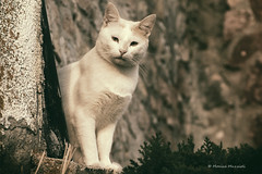 Happy Caturday! (Monica Muzzioli) Tags: cat street white animal animaledomestico gatto caturday