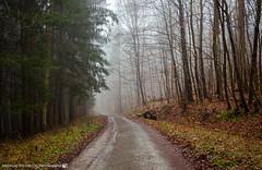 A foggy afternoon in the forests. (andreasheinrich) Tags: landscape forest path trees fog january winter misty cold germany badenwürttemberg neckarsulm dahenfeld deutschland landschaft wald weg bäume nebel januar neblig kalt nikond7000