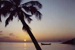 Couchant à Gros-Raisins, 1986 (RarOiseau) Tags: martinique sainteluce arbre couchant mer plage soleil 1986 diapositivenumérisée