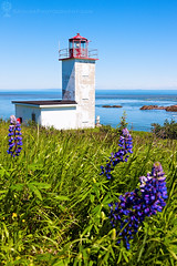 Quaco Head Lighthouse in New Brunswick, Canada (hsadura) Tags: quacohead lighthouse newbrunswick nb canada travel building evening architecture sky ocean atlanticocean nobody navigation grass sea fundybay