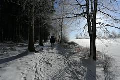 IMG_0229 (rudolf.brinkmoeller) Tags: eifel wandern natur eifelsteig hohesvenn