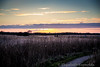 Day 48. (lizzieisdizzy) Tags: sundown sunset sky serene norfolk clouds colourful countryside calm reeds foliage path stone stbenetsabbey peaceful calming beautiful