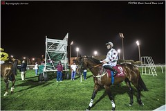 DSC03191 copy (Services 33159455) Tags: qatar doha horse racing qrec emir horseracing raytohgraphy