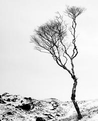 Eden (plot19) Tags: tree blackwhite mood plot19 photography winter nikon north northern northwest england uk