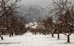 Dia de Reyes (Aristides Díaz) Tags: paisaje nieve rural pueblo montaña almendros perspectiva dilar alayosdeldilar sierranevada granada andalucía nikkoraf28105f3545d